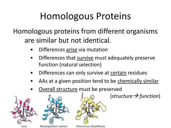 Homologous Proteins