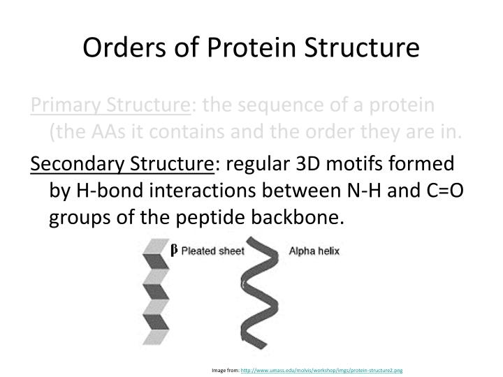 Orders of Protein Structure