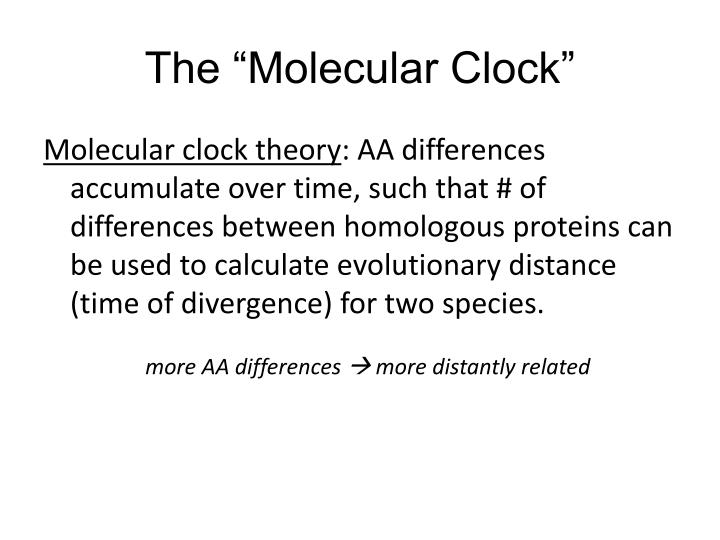 "The ""Molecular Clock"""