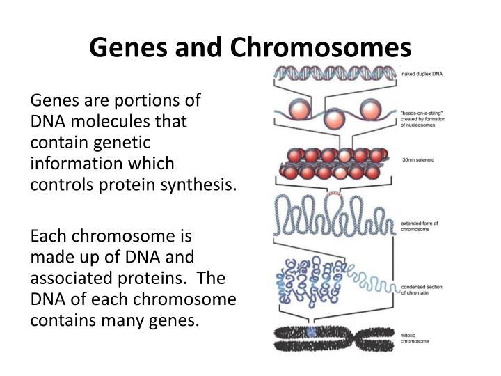 Genes and Chromosomes