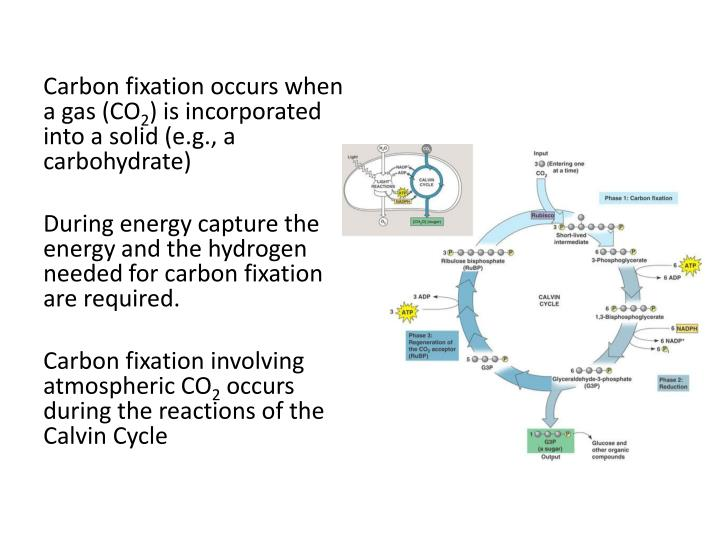 Carbon fixation occurs when a gas (CO