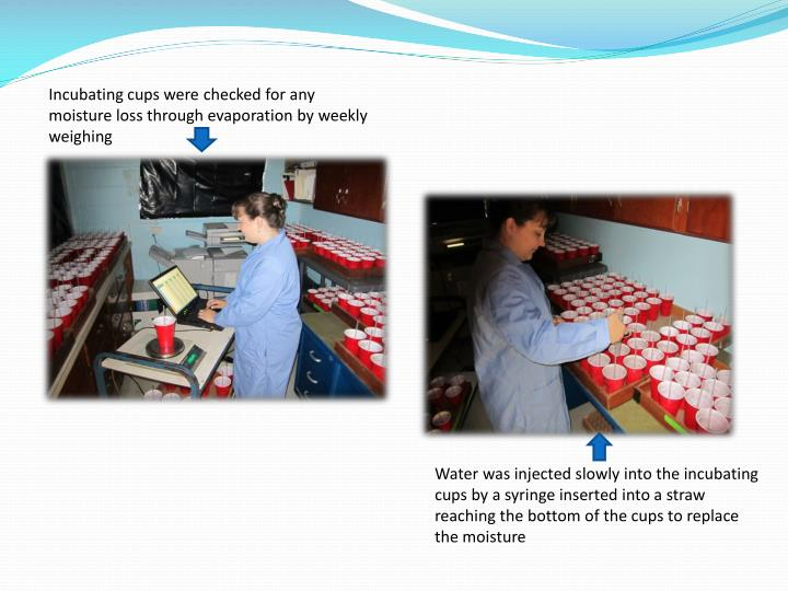 Incubating cups were checked for any moisture loss through evaporation by weekly weighing