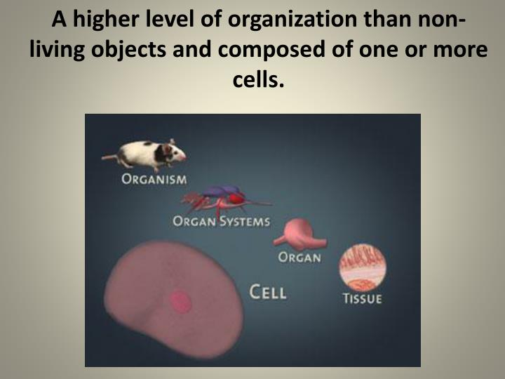 A higher level of organization than non-living objects and composed of one or more cells.