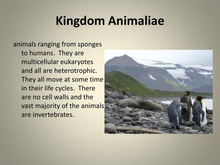 Kingdom Animaliae