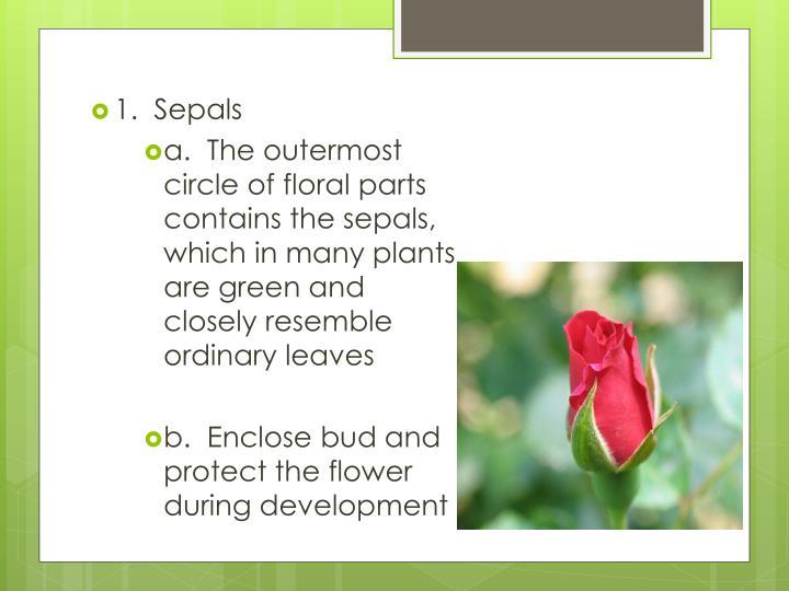 1.  Sepals