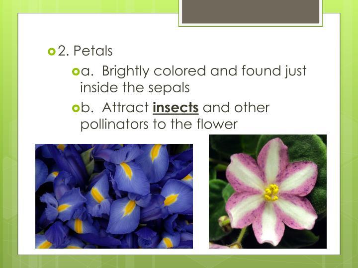 2. Petals