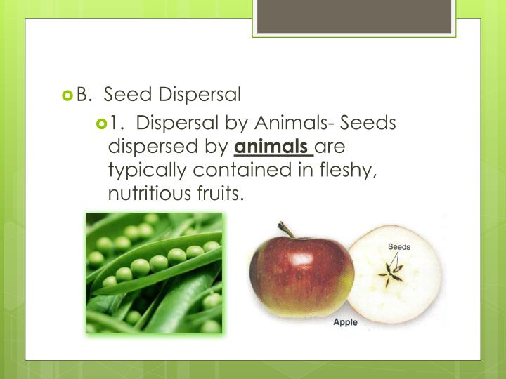 B.  Seed Dispersal