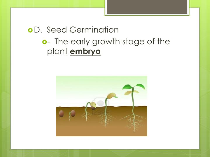 D.  Seed Germination