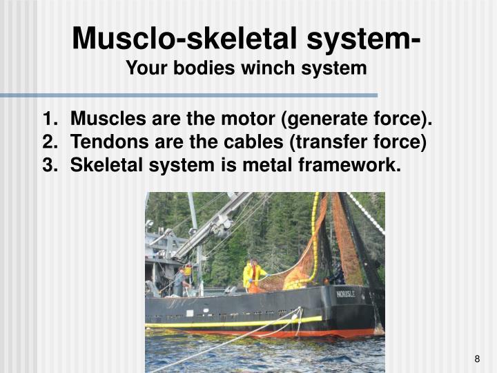 Musclo