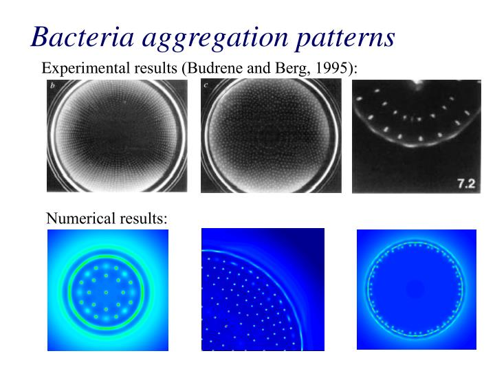 Bacteria aggregation patterns