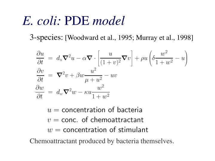E. coli: