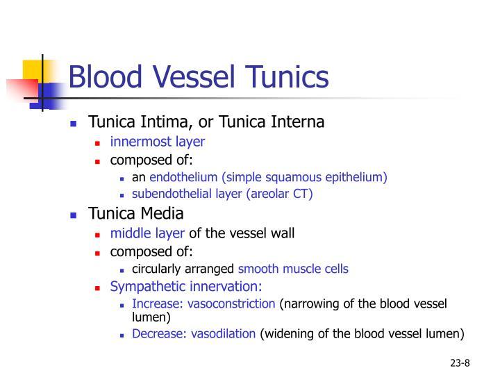 Blood Vessel Tunics