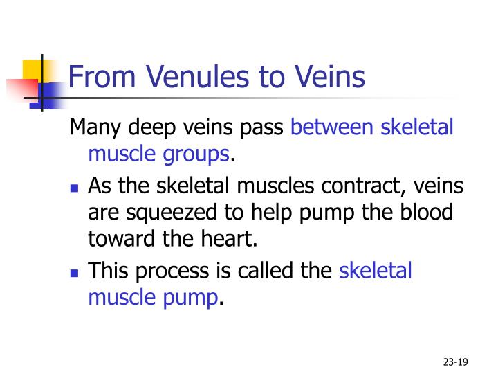 From Venules to Veins