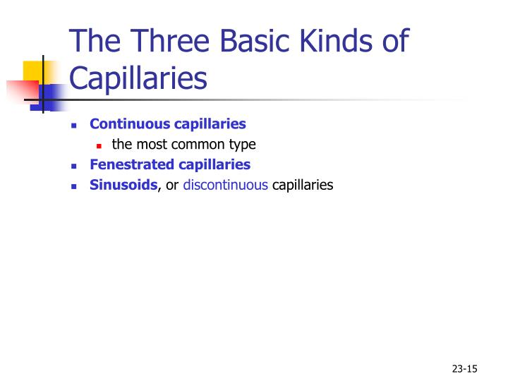 The Three Basic Kinds of Capillaries
