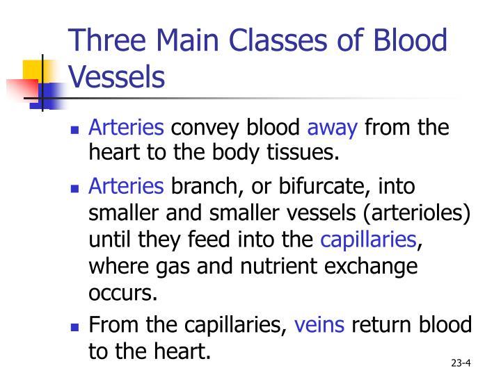 Three Main Classes of