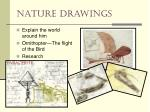 nature drawings