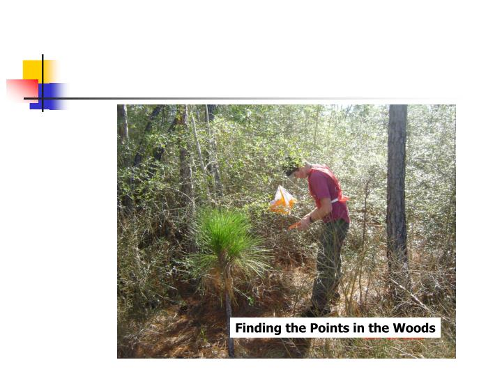 Finding the Points in the Woods