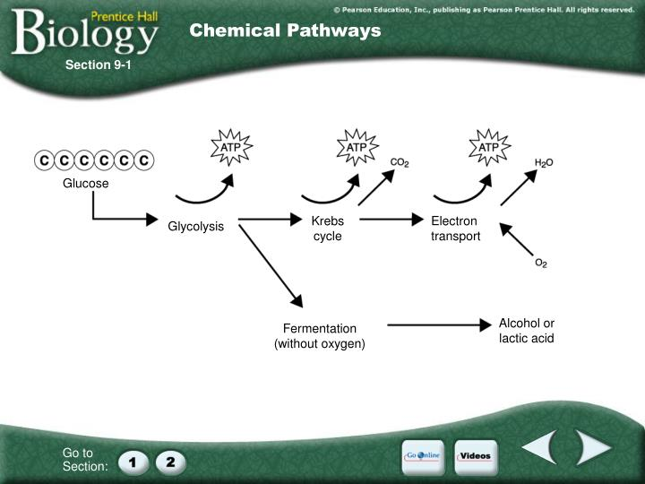 Chemical Pathways