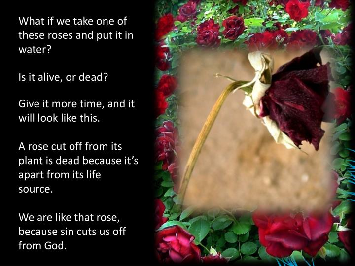 What if we take one of these roses and put it in water?