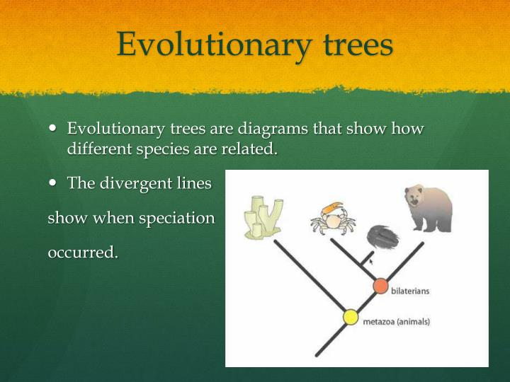 Evolutionary trees