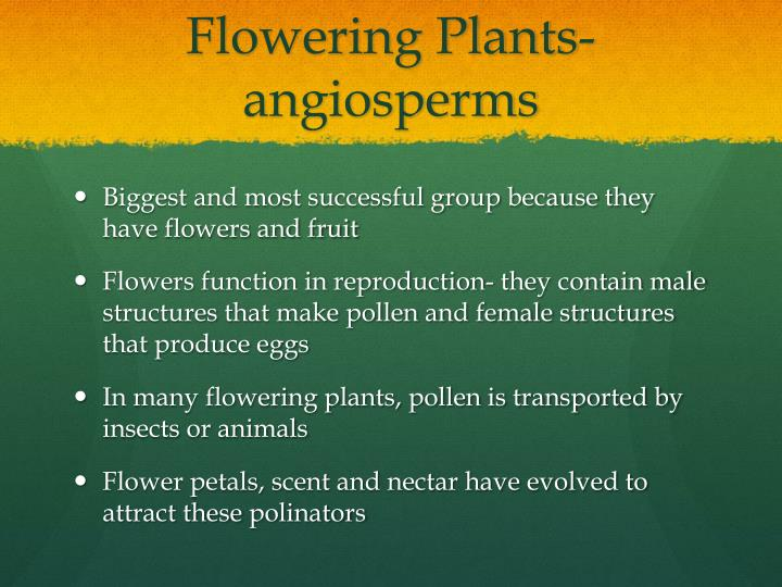 Flowering Plants- angiosperms
