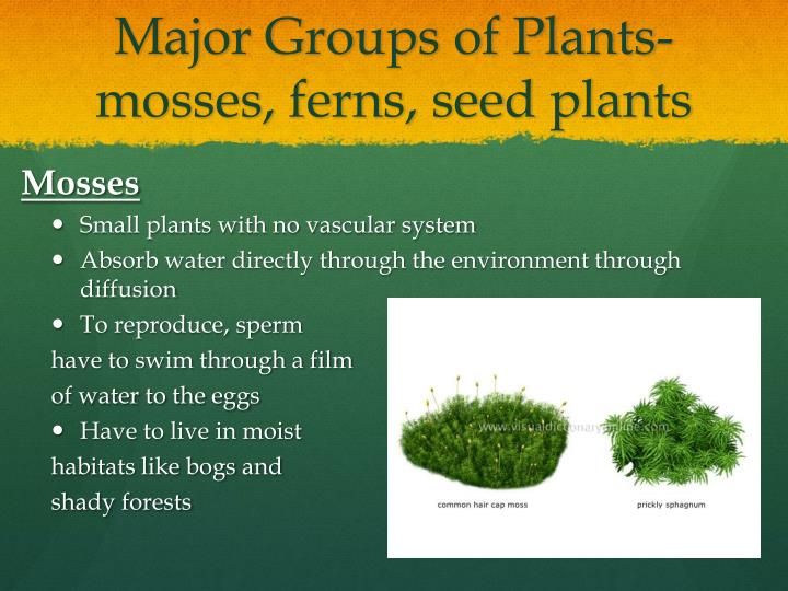 Major Groups of Plants- mosses, ferns, seed plants
