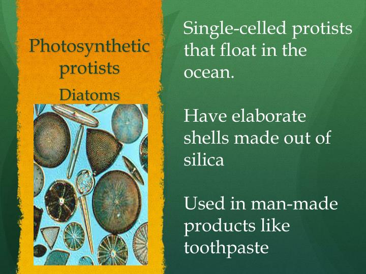Photosynthetic protists