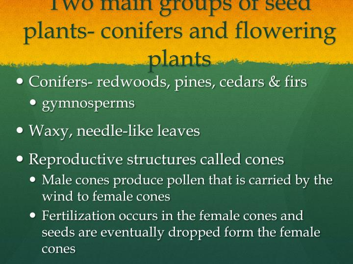 Two main groups of seed plants- conifers and flowering plants