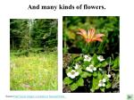 and many kinds of flowers