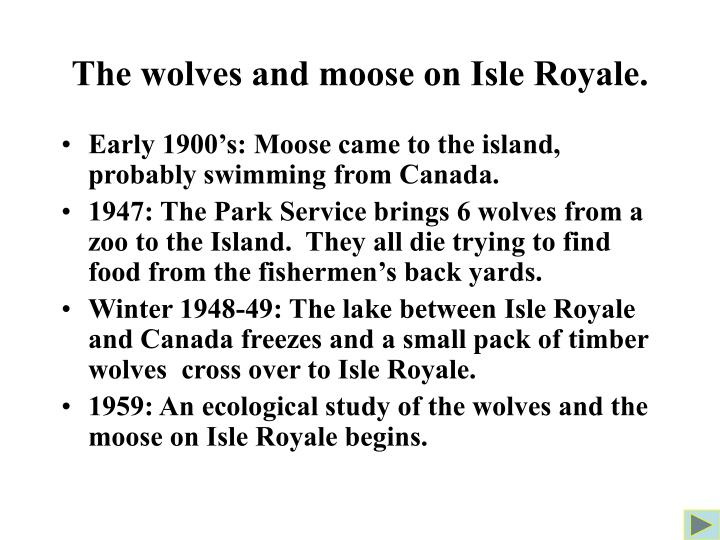 The wolves and moose on Isle Royale.