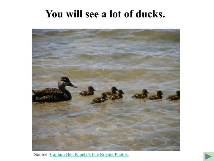 You will see a lot of ducks.