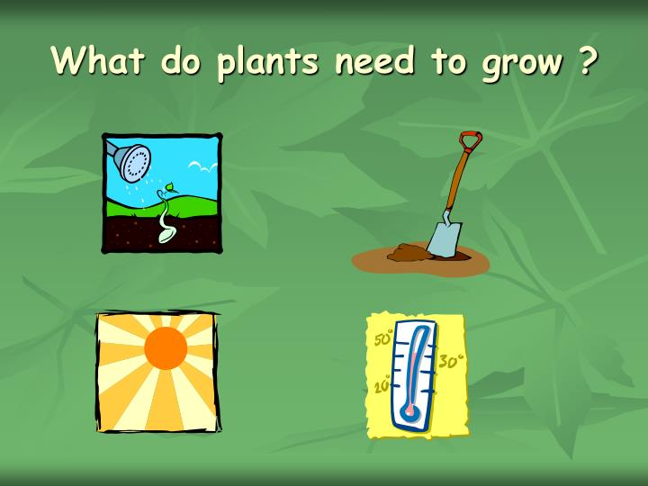What do plants need to grow ?