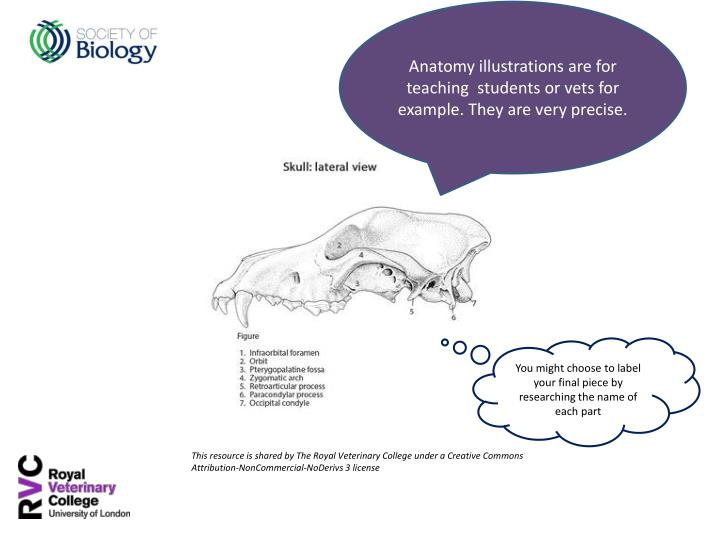 Anatomy illustrations are for teaching  students or vets for example. They are very precise.