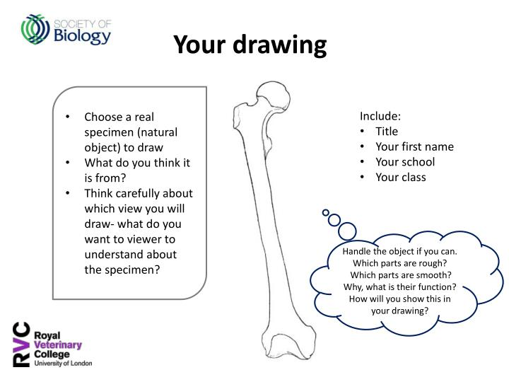 Choose a real specimen (natural object) to draw