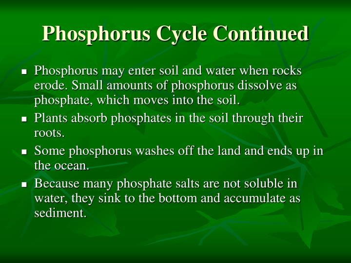 Phosphorus Cycle Continued