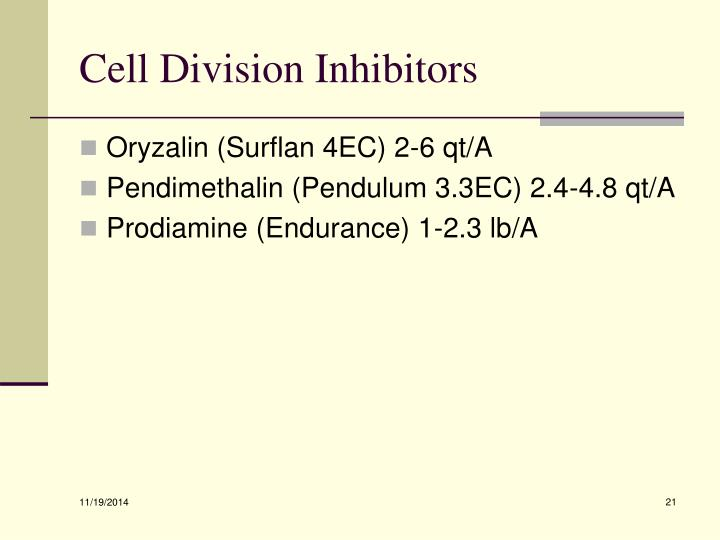 Cell Division Inhibitors