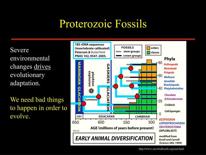 Proterozoic Fossils