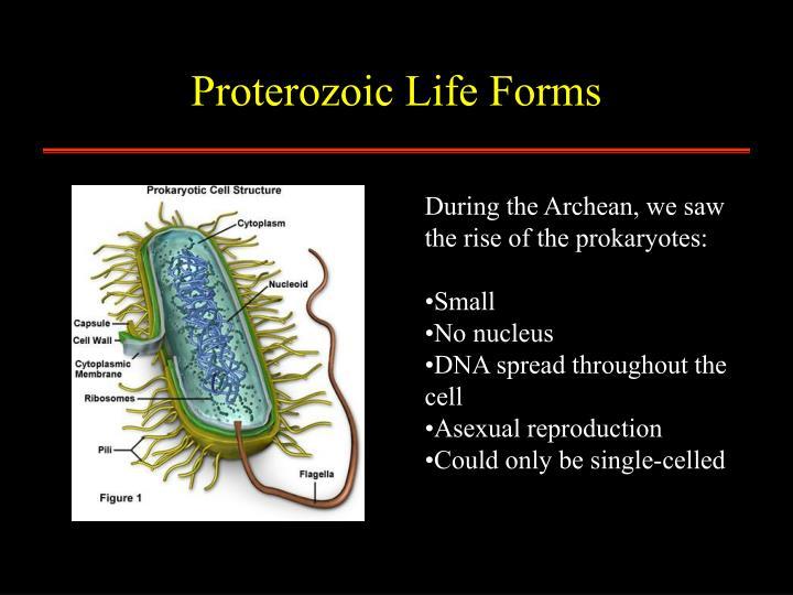 Proterozoic Life Forms