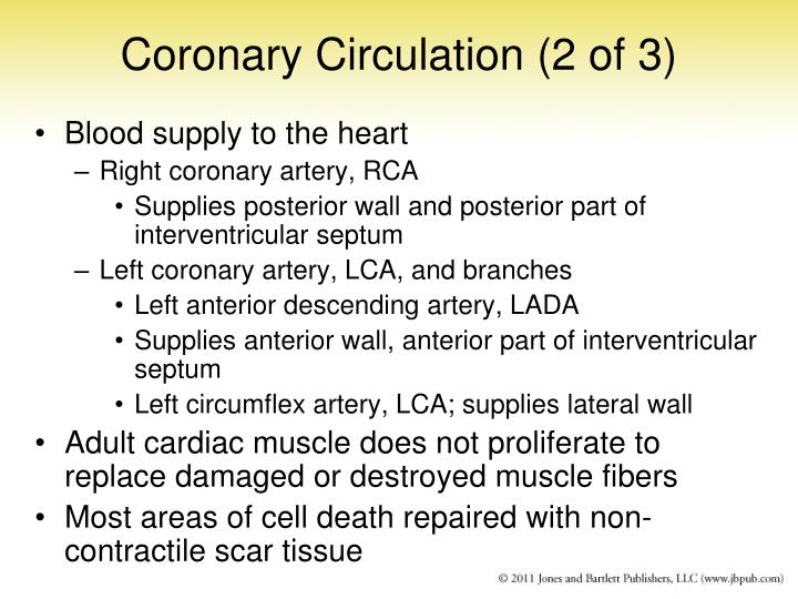 Coronary Circulation (2 of 3)