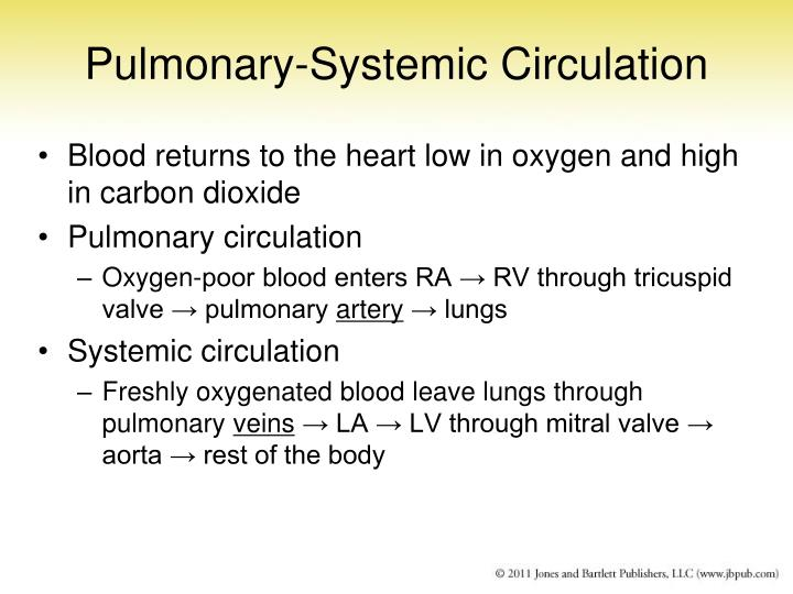 Pulmonary-Systemic Circulation