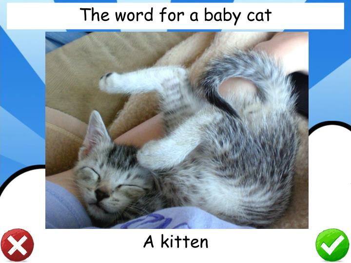 The word for a baby cat