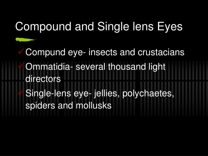 Compound and Single lens Eyes