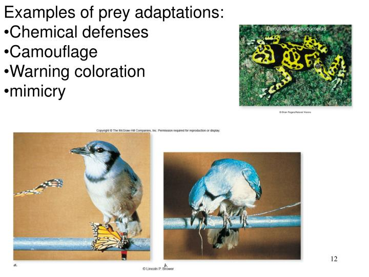 Examples of prey adaptations: