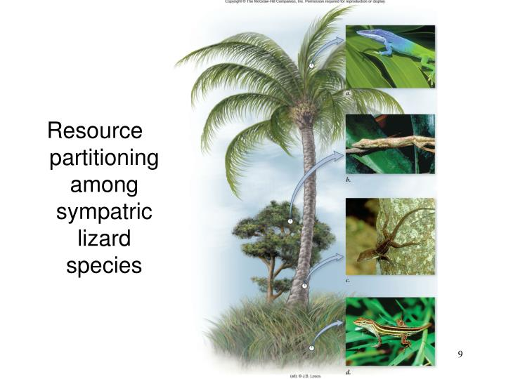 Resource partitioning among sympatric lizard species