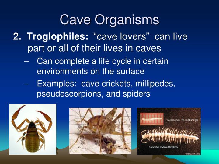 Cave Organisms