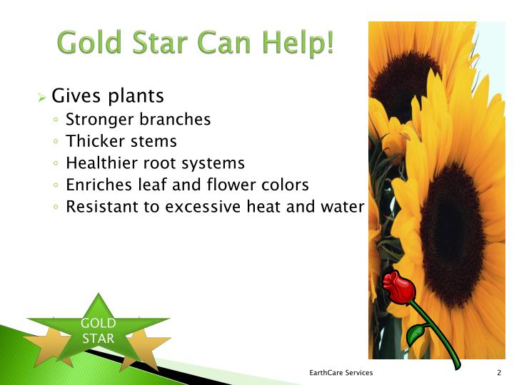Gold Star Can Help!