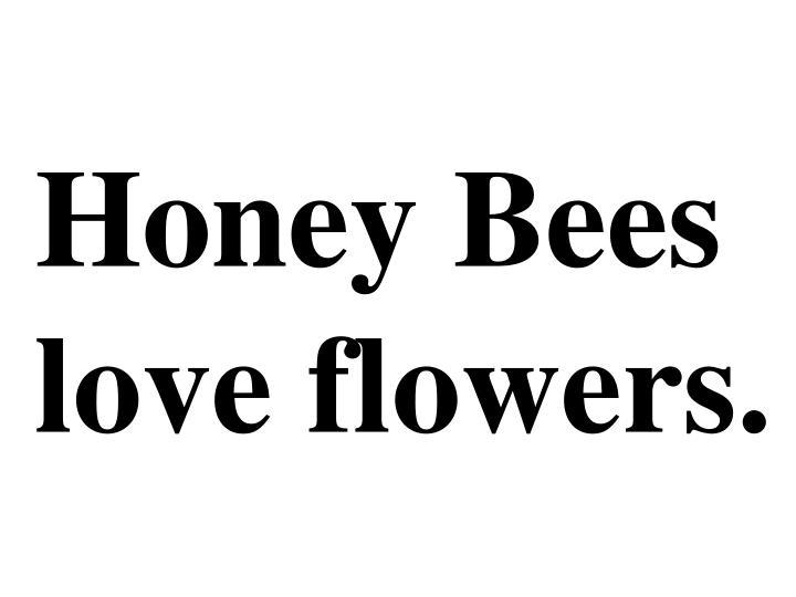 Honey Bees love flowers.