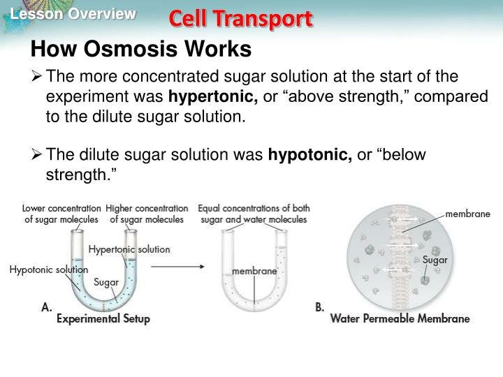 How Osmosis Works