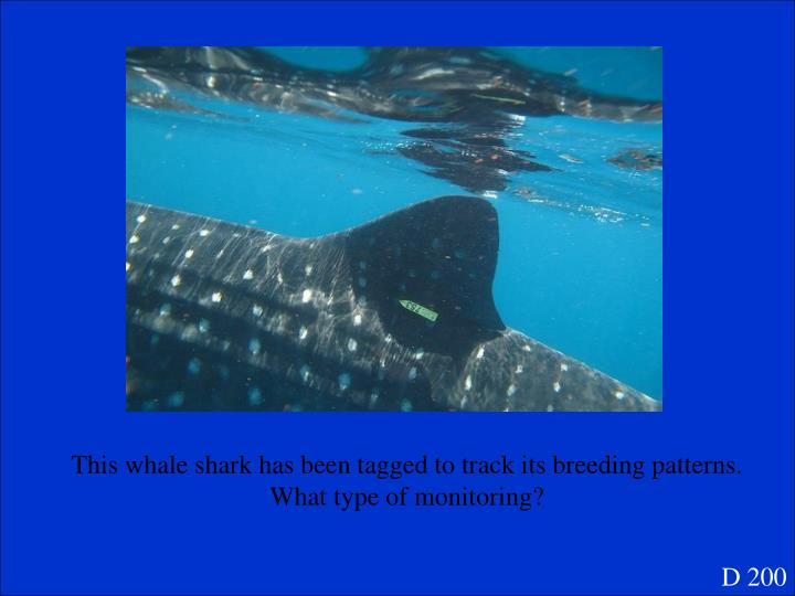 This whale shark has been tagged to track its breeding patterns.  What type of monitoring?