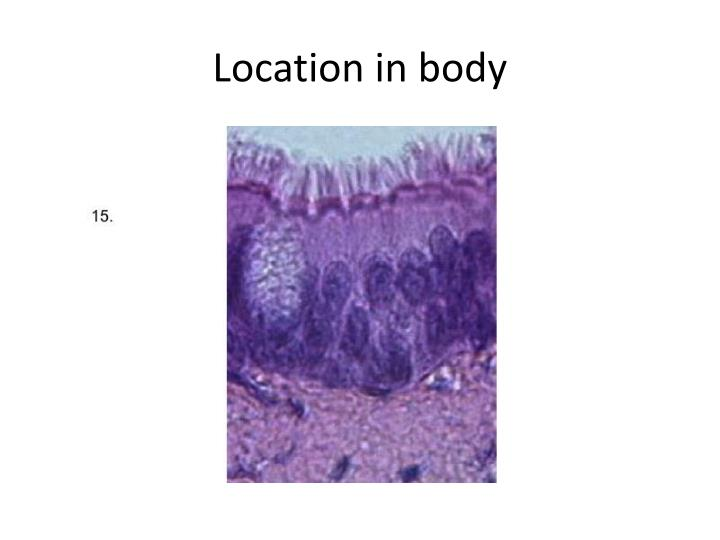 Location in body